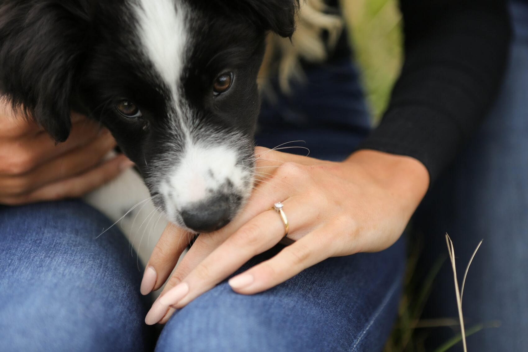 Puppy with an engagement ring